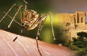 Лихорадкой Западного Нила заразились 11 человек в Ростовской области
