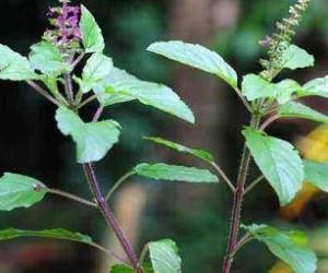 5 лучших растений для укрепления иммунитета
