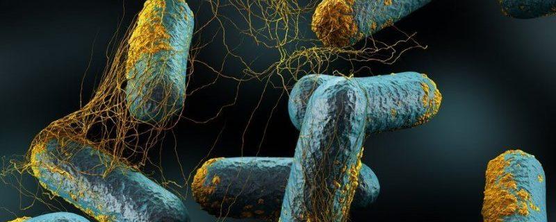 Бактерия, которая может убить все живое