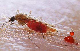 Малярию попробуют лечить по-новому