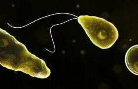 Ученые обнаружили микробы, устойчивые к антибиотикам