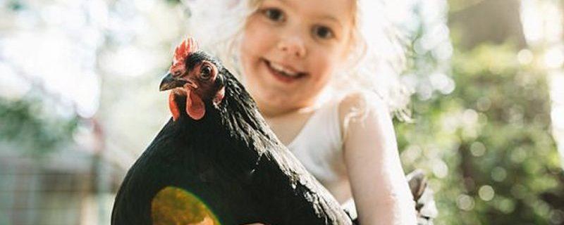 Обнимашки с курицами грозят сальмонеллой