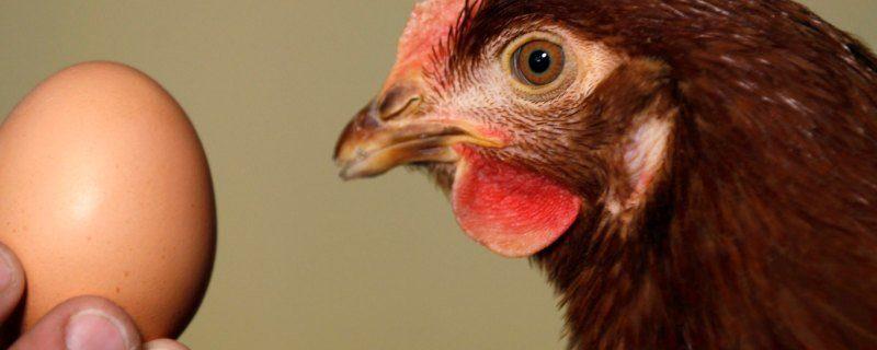 Если ли в петербургский яйца антибиотики и сальмонеллы?
