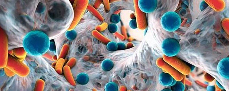 Создан быстрый тест на «супербактерии»