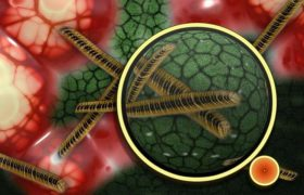 В организме человека обнаружен новый вирус
