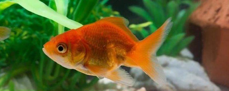 В Америке лечатся рыбьими антибиотиками
