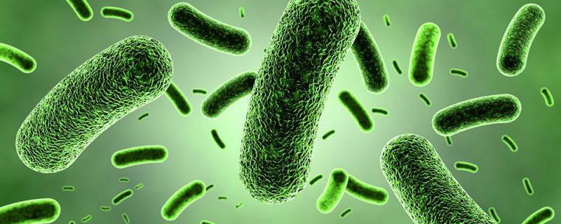 Бактерии могут обмануть запрограммированную смерть клеток