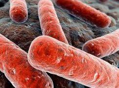 Биологи установили, что позволяет развиваться туберкулезу