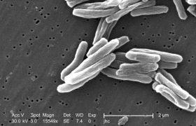Объяснено, как бактерия туберкулеза импортирует витамин В12, необходимый ей для размножения