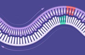Новые данные об «амбиграмматических» вирусах со странными генами, допускающими обратное считывание