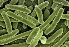 В бактериях нашли новую мишень для антибиотиков