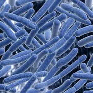 Супербактерии передаются с мясом животных и птиц