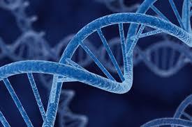 Отечественные генетики взялись за лечение ВИЧ-инфекции