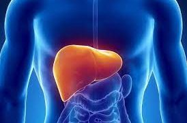 Белки в печени сами позволяют вирусу гепатита проникать в орган