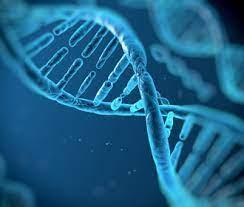 Гетеpогенность неспецифической pезистентности к дизентеpии Зонне и гепатиту A