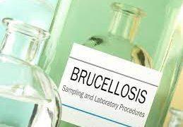 Как обезопаситься от бруцеллеза