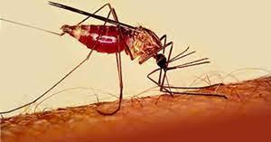 Заболеть малярией можно даже в течение двух лет после посещения страны, в которой распространена эта инфекция